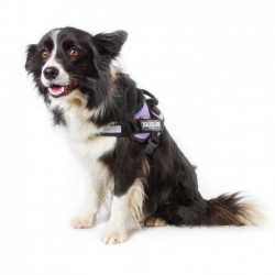 IDC® Powerharness