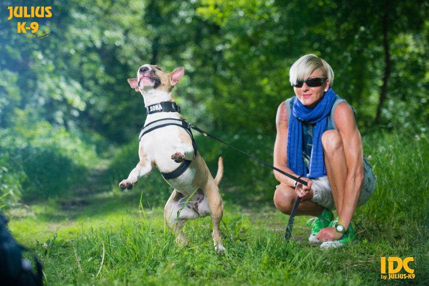 idc-dog-harness-size0-18